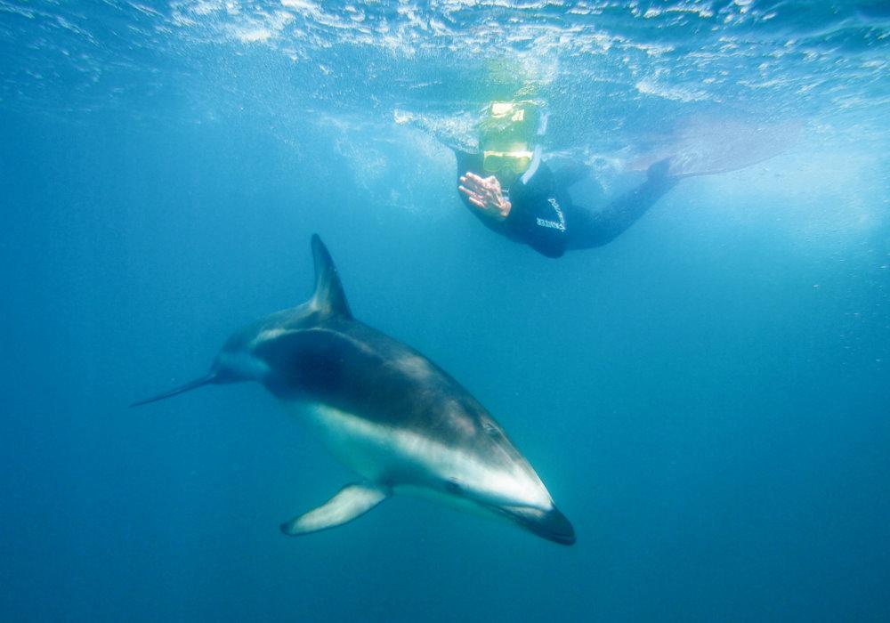 delfin ciemny marcin dobas