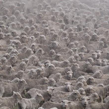 owce marcin dobas