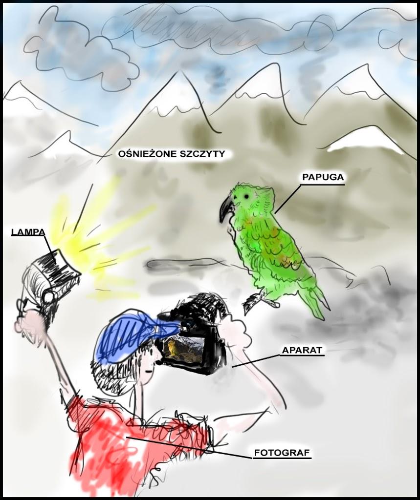 marcin dobas papuga