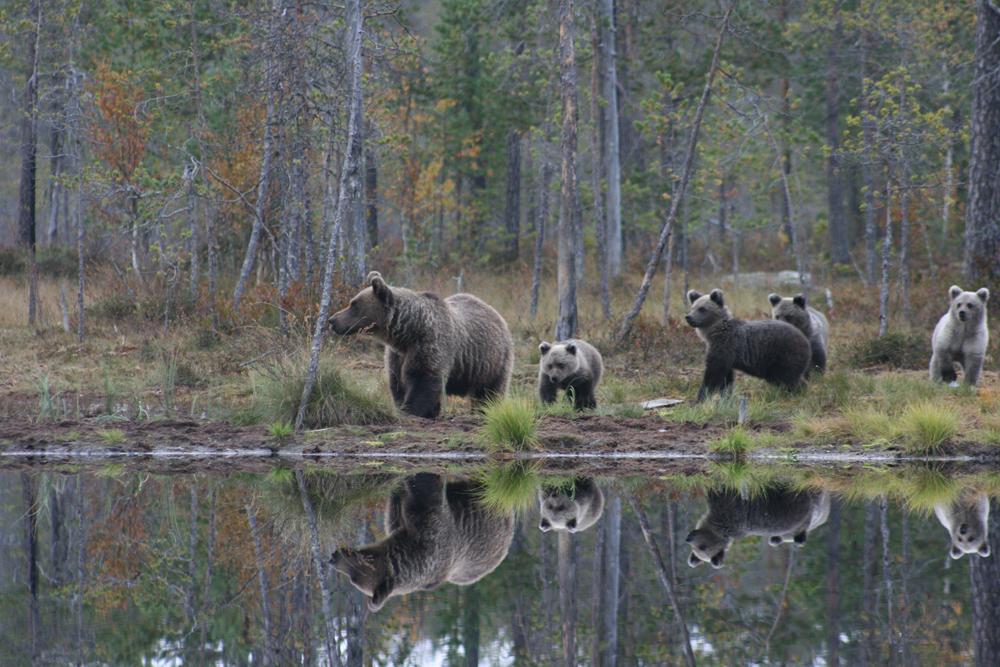 fotowyprawa niedźwiedzie