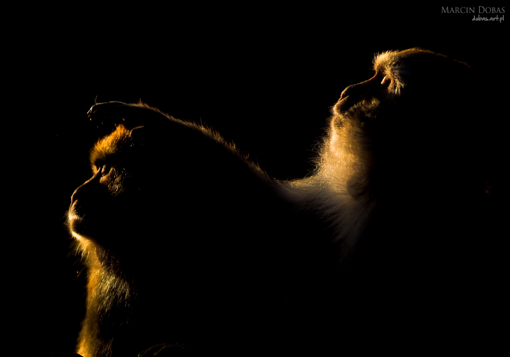 makaki sfotografowane pod swiatlo
