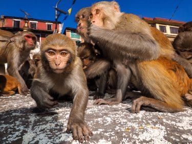 Monkey Temple, Nepal