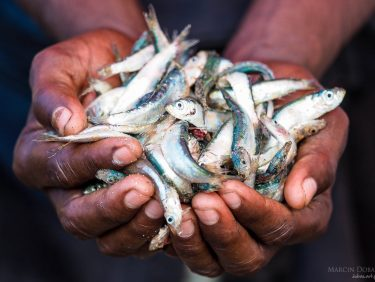 Fishermans hands, Sri Lanka