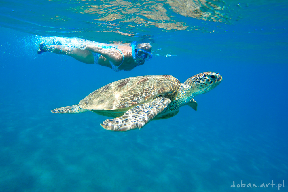Green Sea Turtle (Chelonia mydas) with snorkeling woman