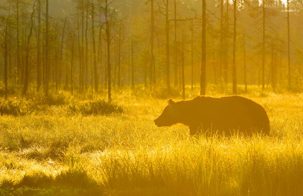 fotowyprawa marcin dobas niedźwiedzie