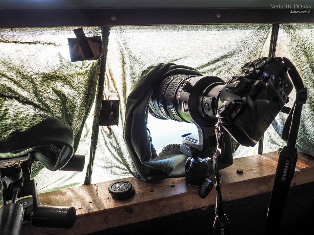 fotografowanie-niedzwiedzi-czatownia